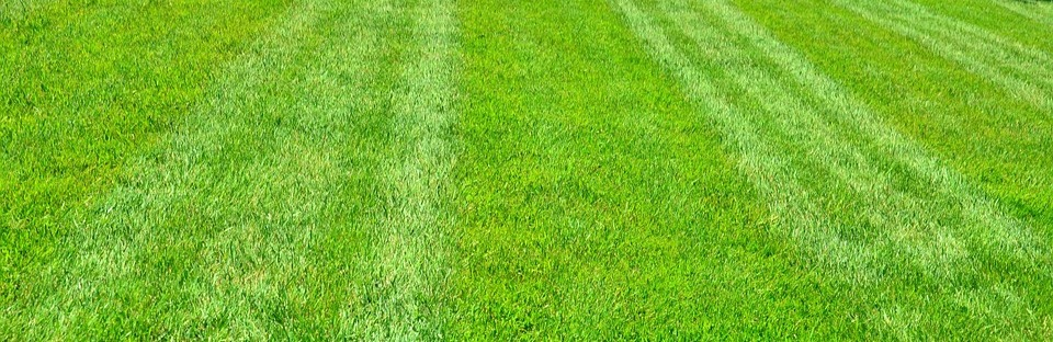 early spring lawn care tips - 960×312